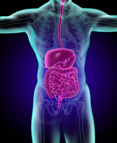 胃や腸は身体の中?外?