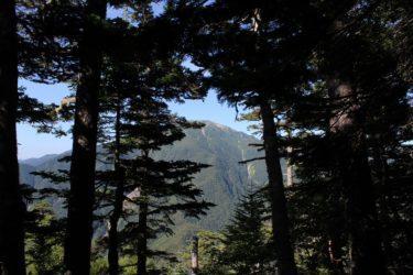ICFを使ってみましょう「木を見て森を見ず」