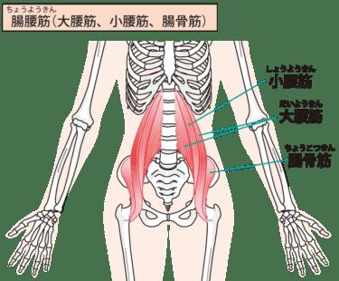 腸腰筋について