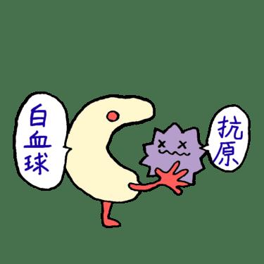 免疫担当の白血球