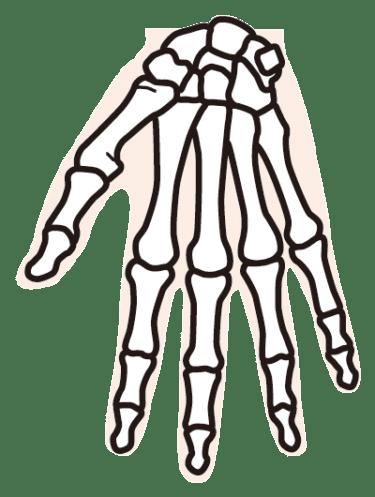手の骨について