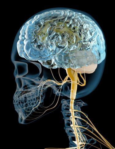 脳神経について