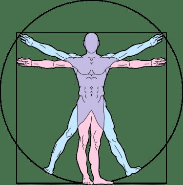 図解解剖と生理学的解剖の父『レオナルド・ダ・ヴィンチ』